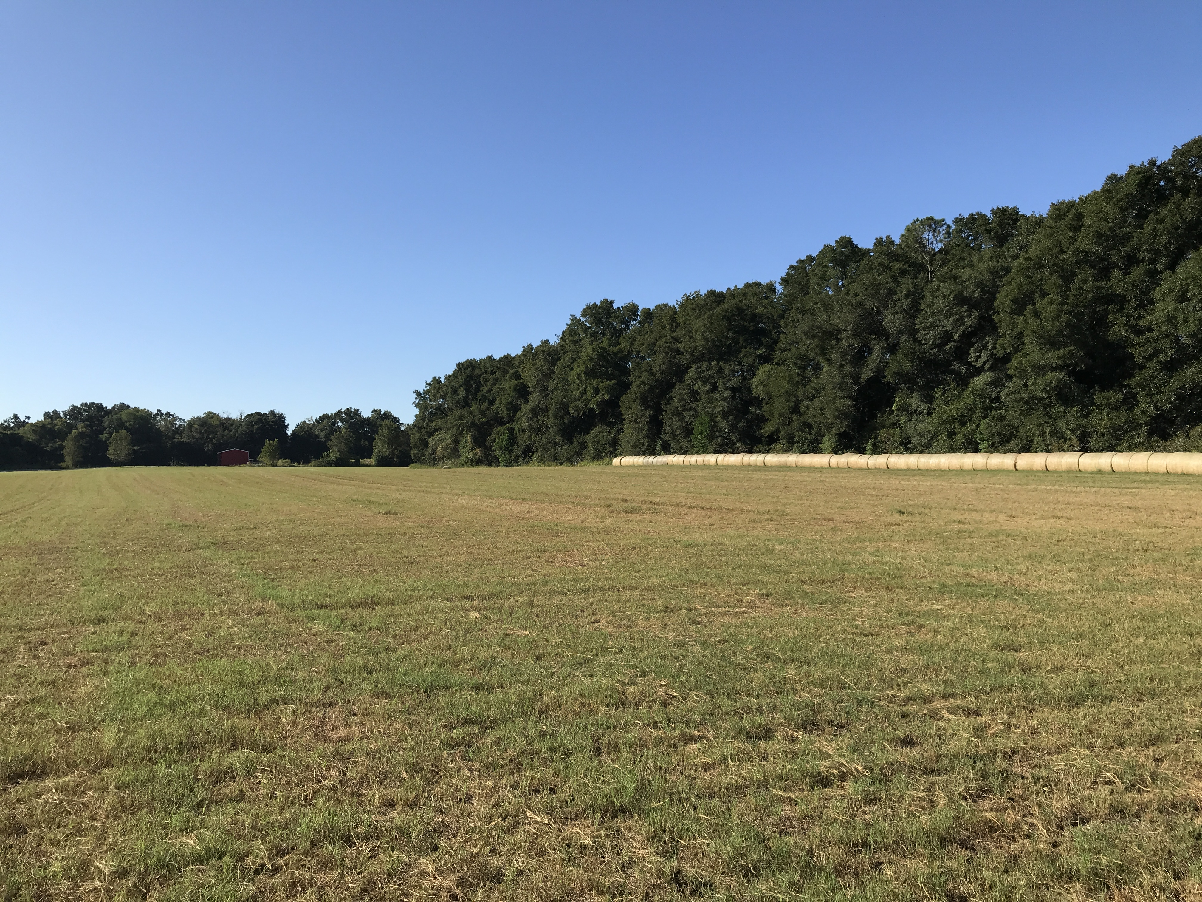 Beautiful high and dry 17.06 acres for homesite